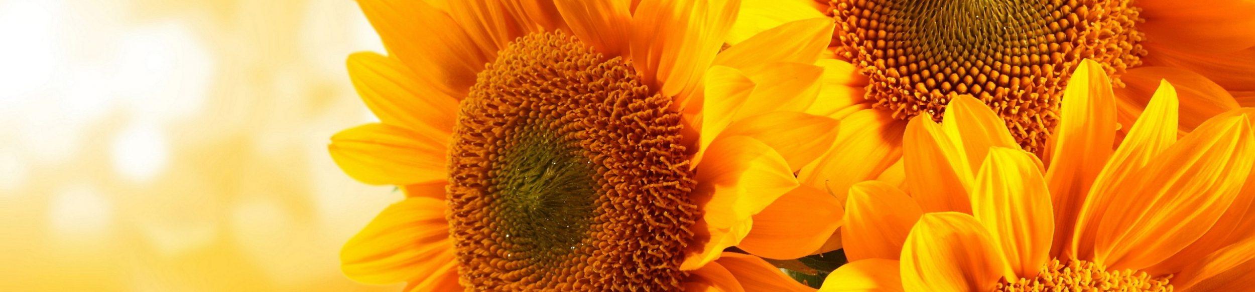 Kwiaciarnia Helianthus Gliwice, ul. Jasna 14A/60